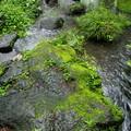 流るる湧水