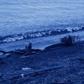 Photos: 海からの届け物