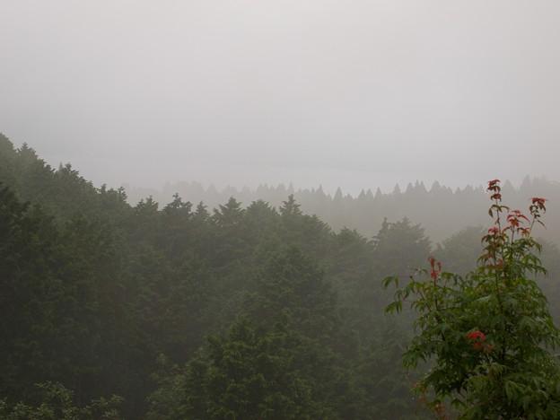 霧の芦ノ湖~箱根町方面