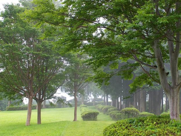 霧の中の山中城址