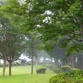 Photos: 霧の中の山中城址