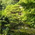 Photos: 小浜池は満水御礼 2020-a