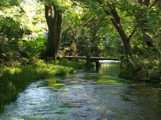 小浜池の瀬も湧水に溢れ 2020-a