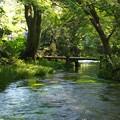 Photos: 小浜池の瀬も湧水に溢れ 2020-a
