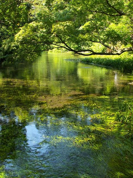 小浜池の瀬も湧水に溢れ 2020-b