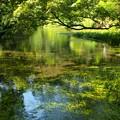 Photos: 小浜池の瀬も湧水に溢れ 2020-b