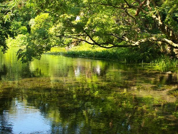 小浜池の瀬も湧水に溢れ 2020-c