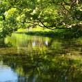 Photos: 小浜池の瀬も湧水に溢れ 2020-c