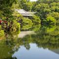 Photos: 小浜池は満水御礼 2020-h