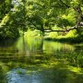 小浜池の瀬は湧水に満ち溢れ