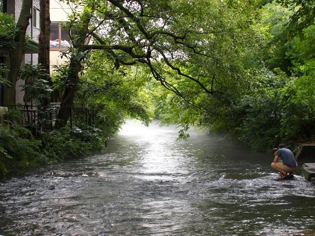 息子よ、これが源兵衛川の湧水だぞ…