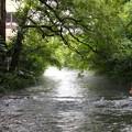 Photos: 息子よ、これが源兵衛川の湧水だぞ…