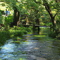 Photos: 水辺の架け橋