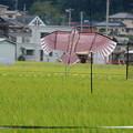 Photos: 珍鳥現る!!!?