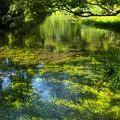 湧水に映える夏の空
