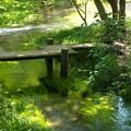 Photos: 流るる湧水