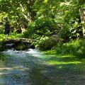 Photos: 和みの水辺