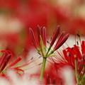 Photos: これから咲くよ~♪