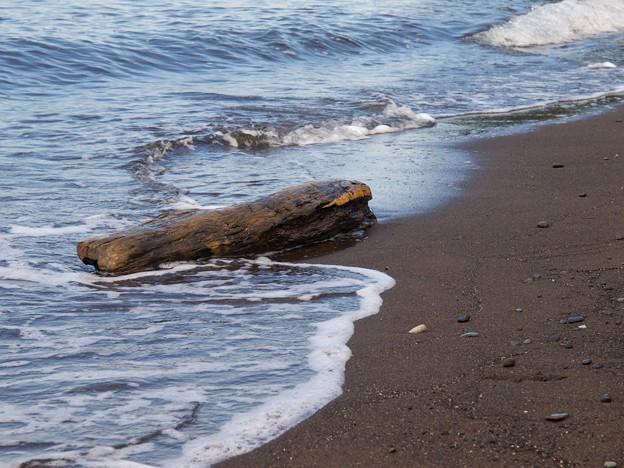 Photos: 海からの贈り物