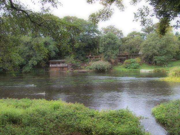 この日も流れる柿田川湧水