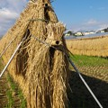 Photos: 収穫の秋