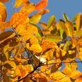 ハロウィン色な秋模様