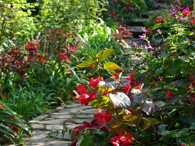 秋の花咲くガーデンロード