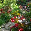 Photos: 秋の花咲くガーデンロード