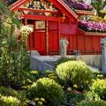 Photos: 菊花に覆われた首里城正殿