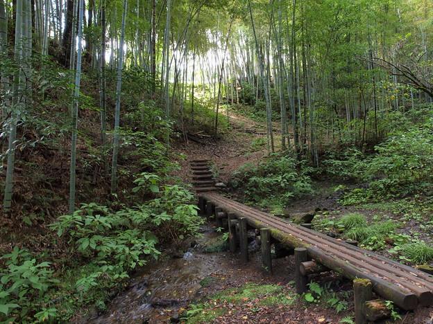 竹林への誘い