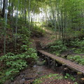 Photos: 竹林への誘い