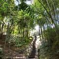 Photos: 竹林の小径