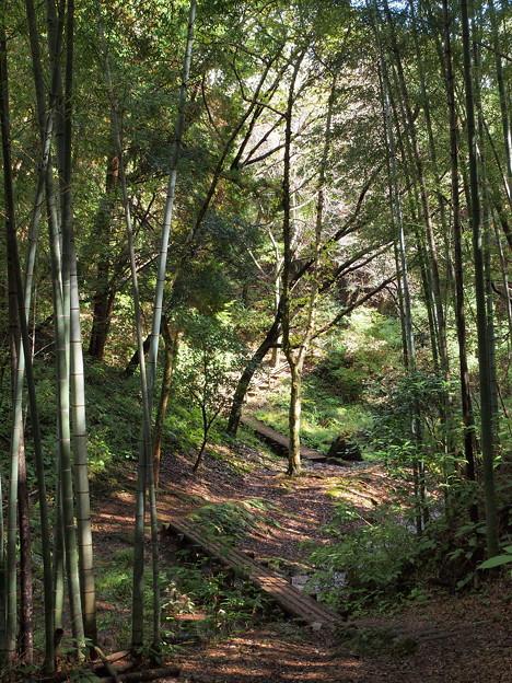 Photos: 竹林とせせらぎの小径