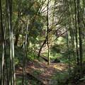 竹林とせせらぎの小径