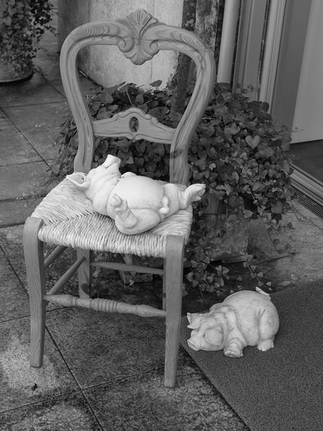 豚さんは寝ている…