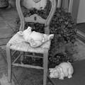 Photos: 豚さんは寝ている…