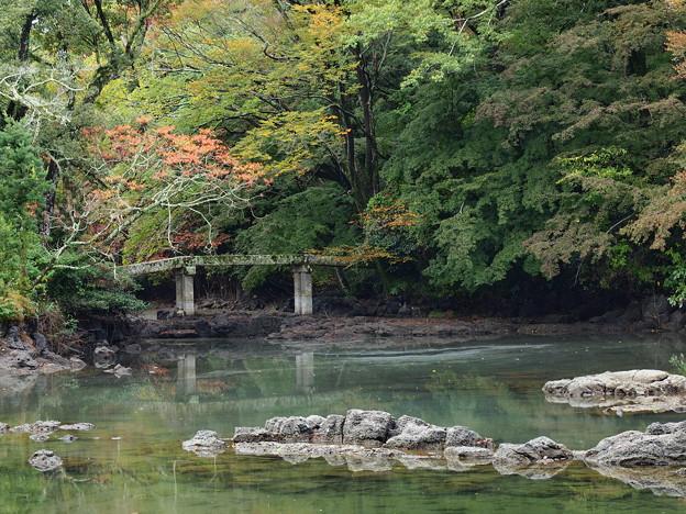 晩秋の小浜池 (弐)