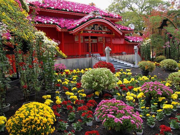 Photos: 菊花に覆われし首里城正殿