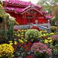 菊花に覆われし首里城正殿