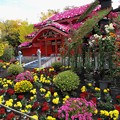 菊花に囲まれし首里城正殿