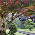 Photos: 晩秋の山寺 (壱)