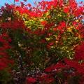 Photos: 晩秋の山寺を彩る