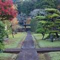 晩秋の彩る境内
