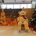 Photos: クマさんのクリスマス~♪