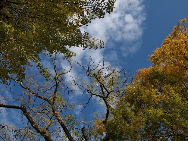 秋の青空・秋の雲、そして、ちょっとだけ秋色