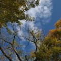 Photos: 秋の青空・秋の雲、そして、ちょっとだけ秋色