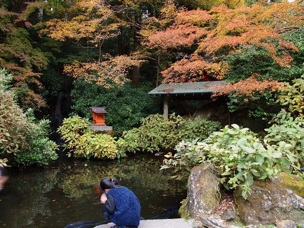 晩秋の池を覗くと…