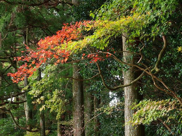 湖畔の小径も秋色