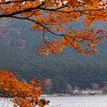 Photos: 湖畔の晩秋