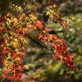 晩秋を彩る秋の色